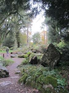 Druid Forest in Ireland