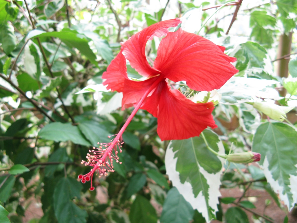Gardens Online Photo