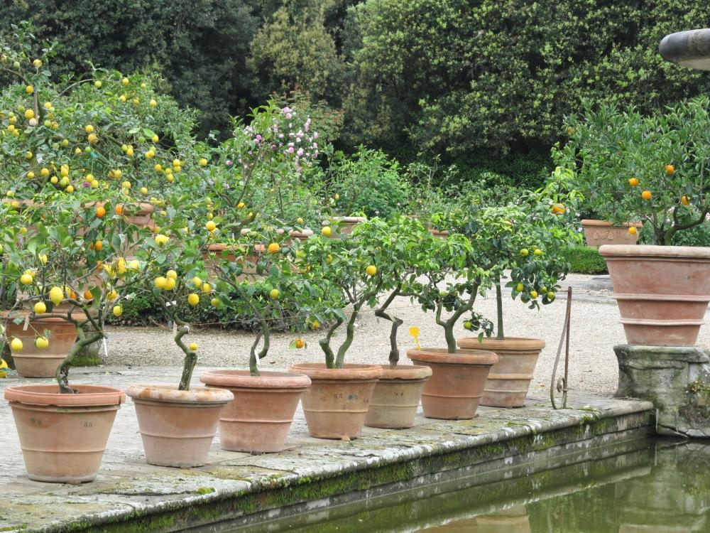 Lemons at Boboli