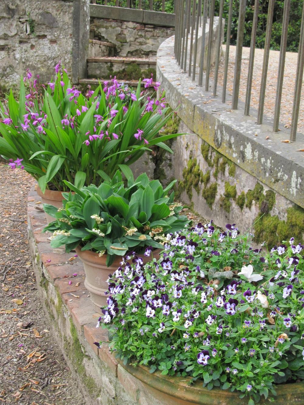 Boboli Garden Plants